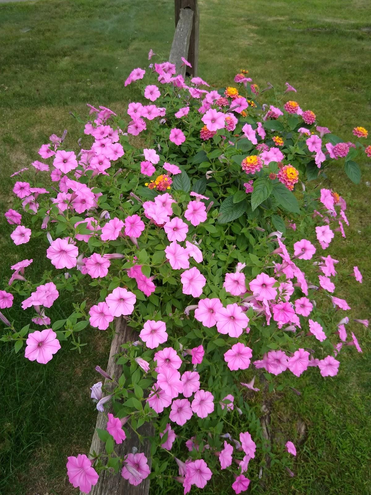 flower fence basket image
