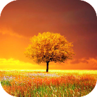 Awesome-Land Pro Live wallpaper icon