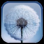 Dandelion Live Wallpaper v1.5.7