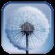 Dandelion Live Wallpaper v1.6.1 (Ad Free)