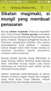 Kicau Sikatan Mugimaki Mp3 - náhled