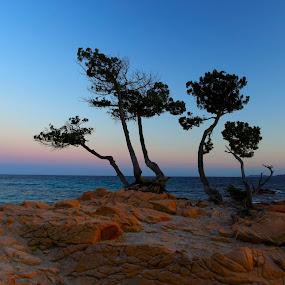 tree pins by Alessandra Antonini - Nature Up Close Trees & Bushes ( sky, nature, sunset, sea, trees, landscape, rocks,  )