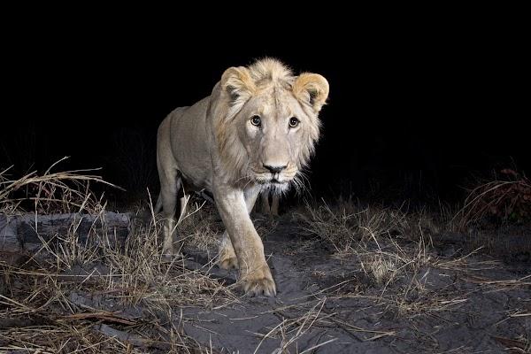 借助 AI 技术以及由动作触发的摄像头识别野生动物