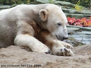 Photo: Knut ist noch etwas muede ;-)