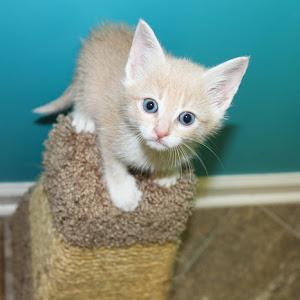 Foster Kitten Peter Lawford.jpg