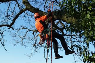 5 shire tree surgery west midlands