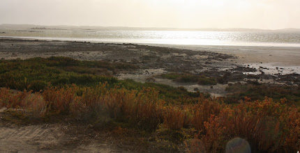 Photo: Year 2 Day 225 - Near Policeman Point on The Coorong