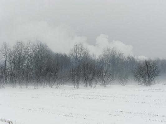 Ovattata nebbia di @ngy