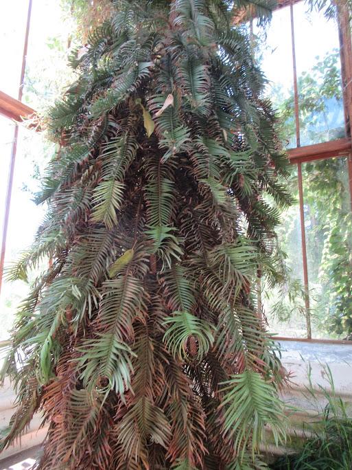 Dating spruce lund