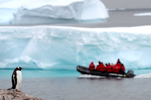 penguin-antarctica.jpg - A penguin stands guardian as a Ponant expedition Zodiac passes by in Antarctica.