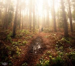 Photo: Morning Mist