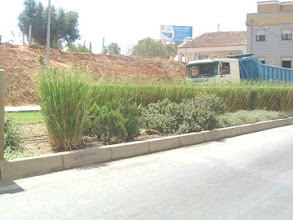 Photo: PRT-UR01 Lagos, Portugal. Vetiver used as a screen against oncoming car lights