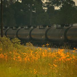 Train in the flower field by Rhonda Kay - Transportation Trains
