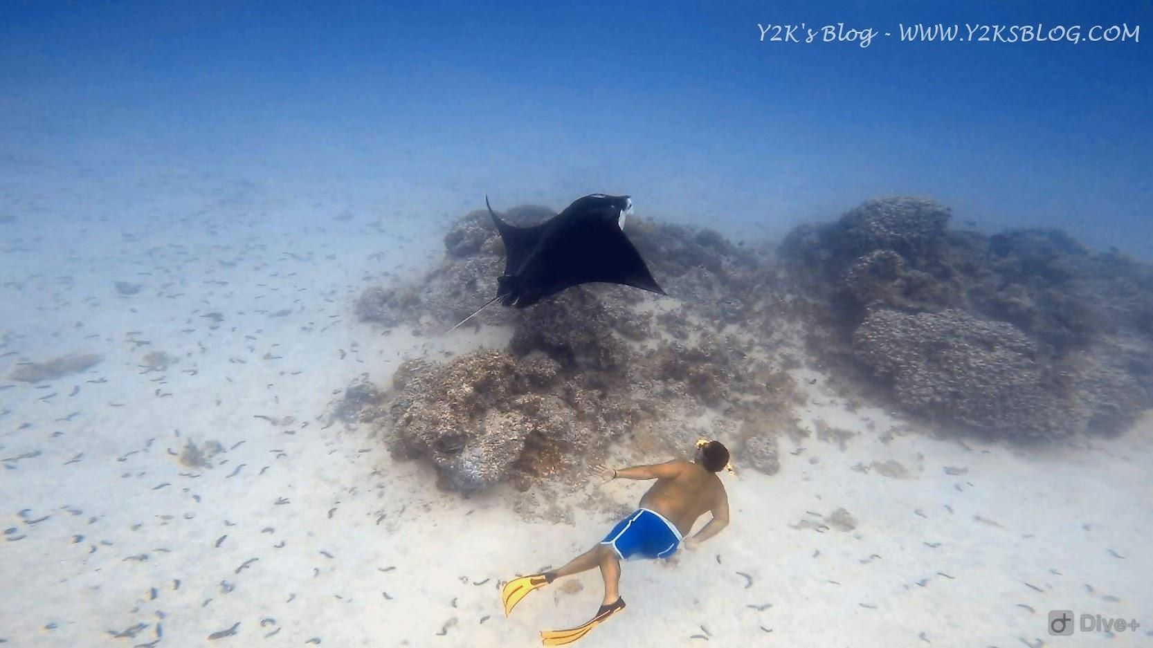 Max nuota con una Manta - Maupiti