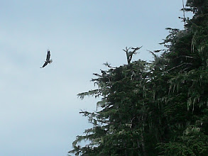 Photo: An eagle leaves it's nest.