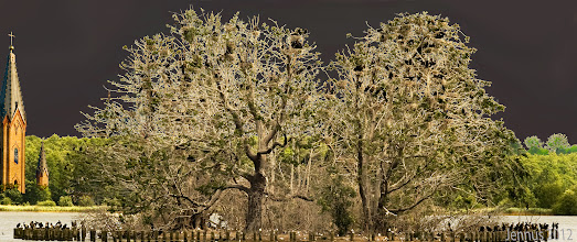 Photo: bird Island, black birds build their nests here  Das Landschaftsschutzgebiet am lang gestreckten Tollensesee umfasst auch die Vogelschutzinsel Kietzwerder in der Lieps.