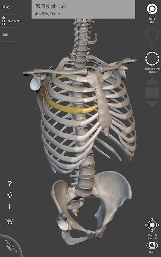 骨格系 - 解剖学3D アトラス – 人体の骨格