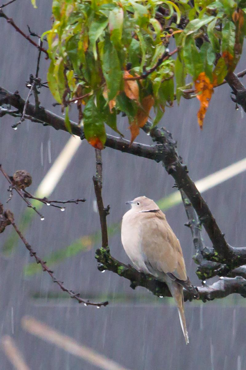 Se va avanti così.........piove!! di Miche