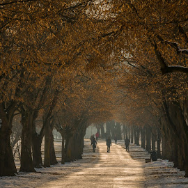 by Mario Horvat - City,  Street & Park  City Parks ( city, snow, winter, trees, park )