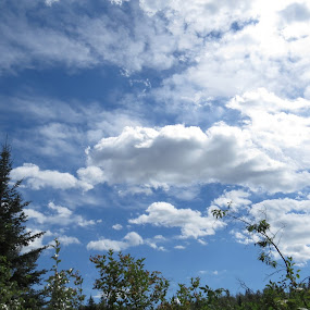 Touching the clouds by Rose McAllister - Landscapes Cloud Formations ( clouds, sky, nature, blue, trees,  )