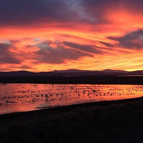 Birds and Sunset by Tracy Lynn Hart - Landscapes Sunsets & Sunrises ( clouds, water, orange, migratory, sky, colors, sunset, birds, rural, fields,  )