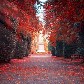 Autumn Park by Łukasz Rogalski - City,  Street & Park  City Parks ( park, autumn leaves, wales, autumn, chester, autumn colors,  )