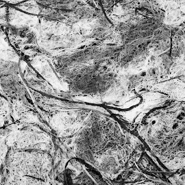 Lines in the moss by Craig Turner - Abstract Patterns ( moss, b&w, north coast, norcal, bodega )