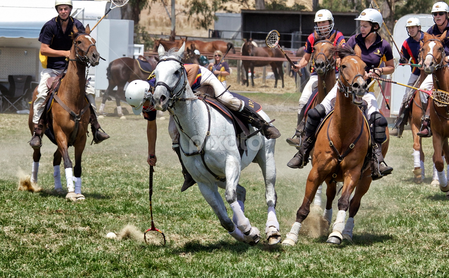 Polocrosse.. by Ali Brown - Sports & Fitness Other Sports ( polocrosse, horses, pwcmovinganimals, polo )