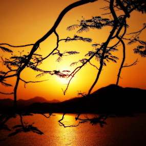 sunset by the lake by Vikas Jorwal - Landscapes Sunsets & Sunrises ( water, orange, sky, tree, waterscape, sunny, sunset, sundown, lake, sunrise,  )