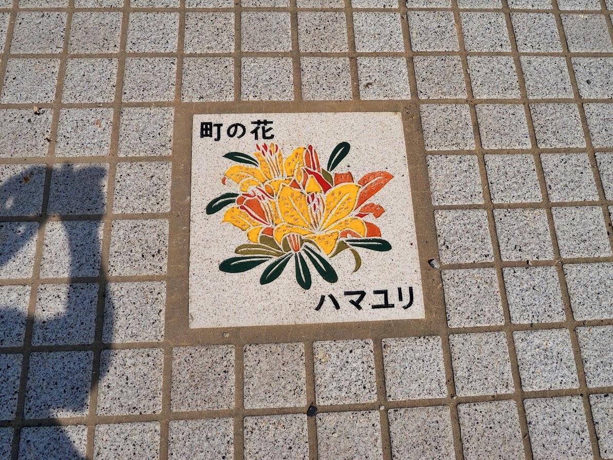 町の花 ハマユリ