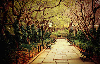 "Photo: ""The urban forest primeval...""  Weary after a long slumber, the urban forest primeval stirs.  Trees, in resplendent garments of ivy, stretch their graceful limbs towards each other as the dance of spring begins: a prelude to summer's grand symphonic poem. —- This particular path in the Conservatory Garden located in Central Park is one of my favorite spot. It makes me feel as if I have escaped the city all while still feeling tied to it in an inexplicable yet endearing way. I fall in love with it a little bit more each time I come across it.  Last week, when I took this photo, it was no different. The trees which had been frozen in winter's sleepy embrace were newly adorned with tiny spring blossoms and deep green ivy and it seemed as if all life in the city halted to watch them dance with their graceful limbs if only for a moment.    New York Photography: Conservatory Garden in the spring. Central Park.    You can view this post along with information about how to purchase this image as a print if you wish at my site here:  http://nythroughthelens.com/post/20170245942/tree-lined-path-in-spring-conservatory-garden  -  Tags: #photography #newyorkcity #nyc #writing #prose #poetry #trees #landscape #park #centralpark #spring #springtime #manhattan"