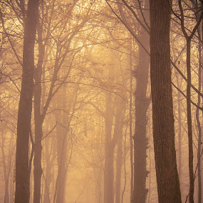 Misty forest by Anne-Cecile Pflieger - Landscapes Forests ( fall colors, pathway, forest, leaf, leaves, woods, foggy, annececilegraphic, tree, fog, autumn, fall, path, trees, brown, misty, mist,  )