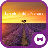 Flower Wallpaper Lavender Field in Provence Theme