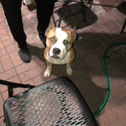 Do you know my owner?, FOUND Oct 23, 2019