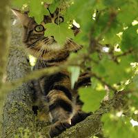 Curiosare dall'albero di
