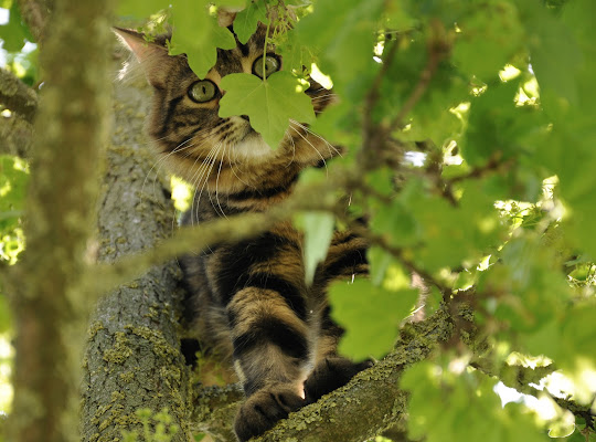 Curiosare dall'albero di cristins