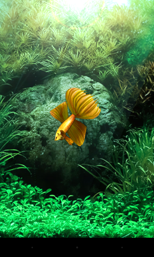 Gold betta fish live wallpaper android apps on google play for Fish live game
