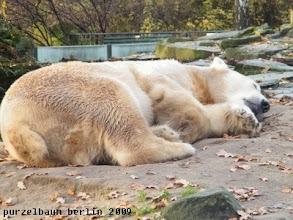 Photo: ... und weiterschlafen ;-)