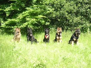 Photo: A-team wandeling Spanderswoud, juni 06