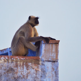 Pensive by Vaibhav Purohit - Animals Other Mammals