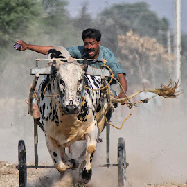 Bull cart by Abdul Rehman - Sports & Fitness Other Sports ( beauty, culture, natural light, pakistan, cultural heritage, dust, bull,  )