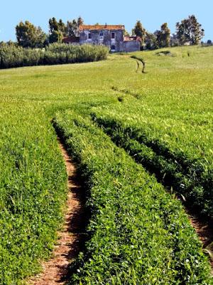 La strada nell'erba di Isabella62