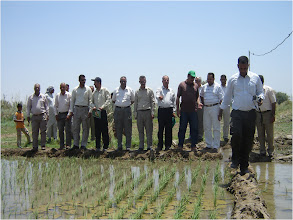 Photo: Farmers observe their recent work, 2010 [Photo provided by  Khidir A. Hammed]