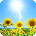 Sunflowers Live Wallpaper Icon
