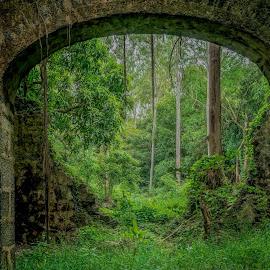 abandon park  by Peter Schoeman - City,  Street & Park  City Parks ( abandon, grass, trees, ruin, park, structure )