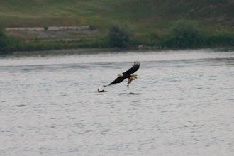 Photo: Eagle Strike #4. Taken July 17th, 2010