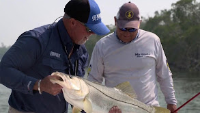 Monster Snook in the Everglades thumbnail