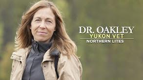 Dr. Oakley, Yukon Vet: Northern Lites thumbnail