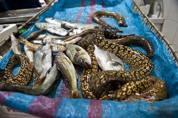 pesci di luigino
