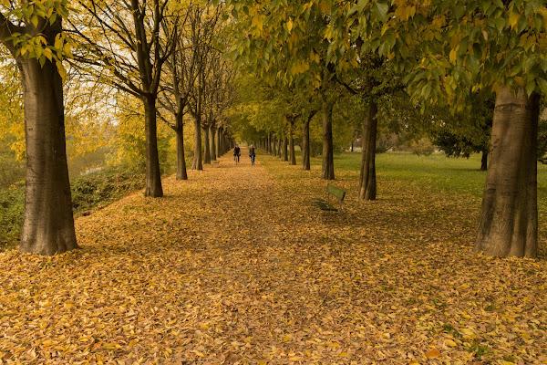 Pedalando su un letto di foglie di Davide_79